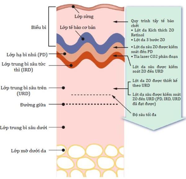 Hình 5.1: Các lớp da và quy trình khắc phục
