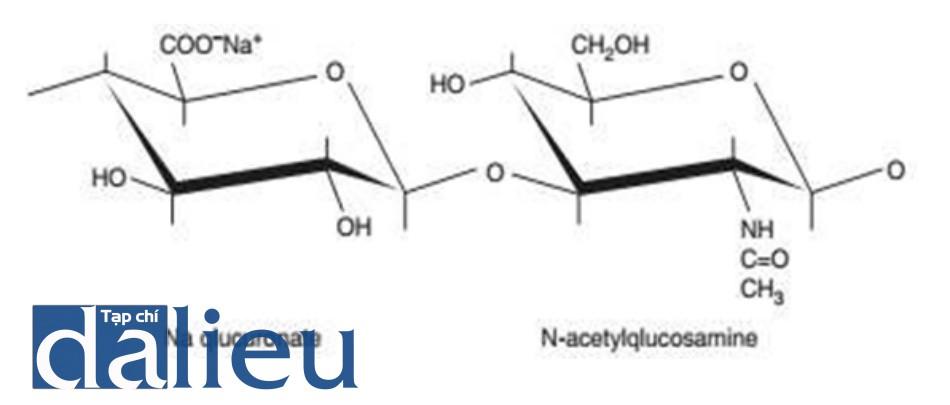 Hình 2.1 Cấu trúc phân tử của hyaluronic acid