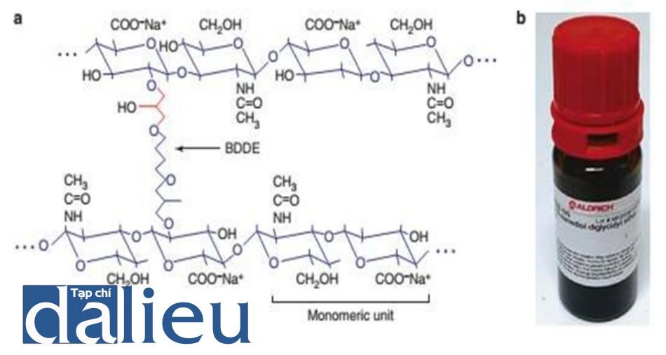 Hình 2.3 Quá trình tạo liên kết và chất tạo liên kết. (a) Cấu trúc phân tử của chất tạo liên kết. (b) Chất tạo liên kết: 1,4-butanediol diglycidyl ether (BDDE).