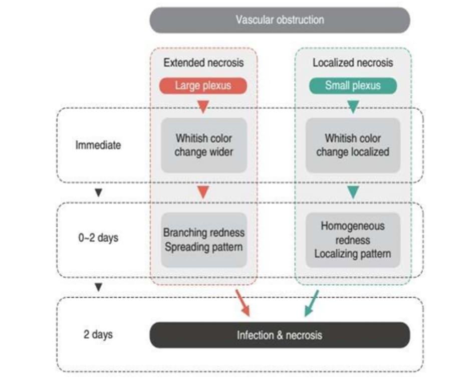 Hình 5.2 Sinh lý bệnh hoại tử da do tắc nghẽn mạch