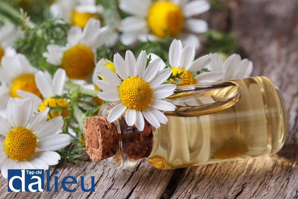 Tinh dầu hoa cúc trị mụn li ti hiệu quả