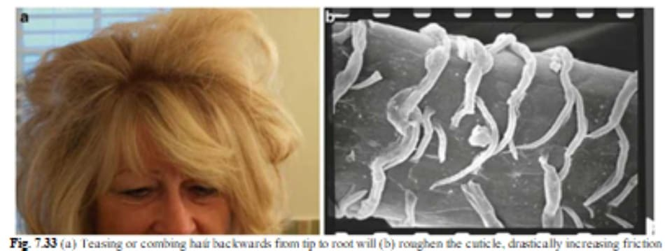 Fig. 7.33 (a) Teasing or combing haứ backwards from tip to root will (b) roughen the cuticle, drastically increasing friction
