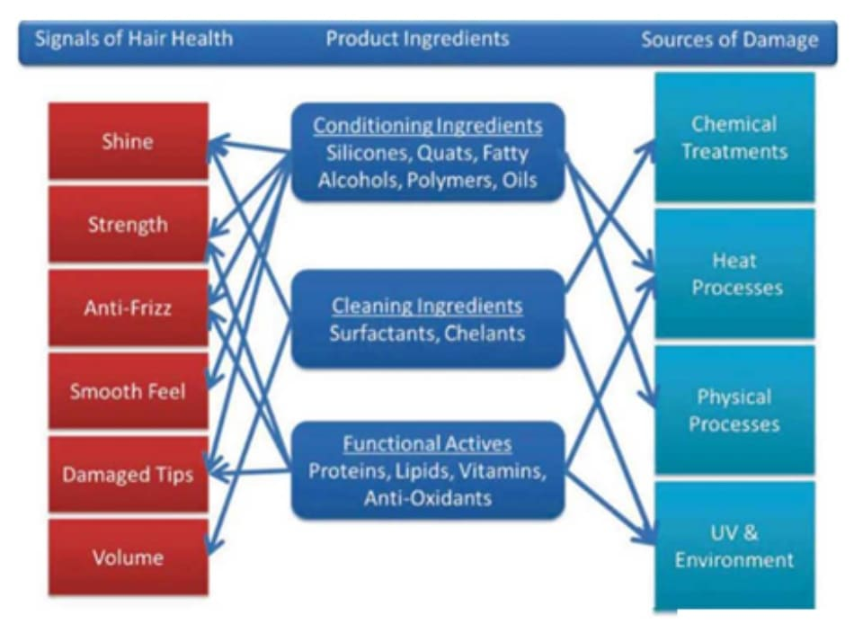 Fig. 7.4 Hair health connections