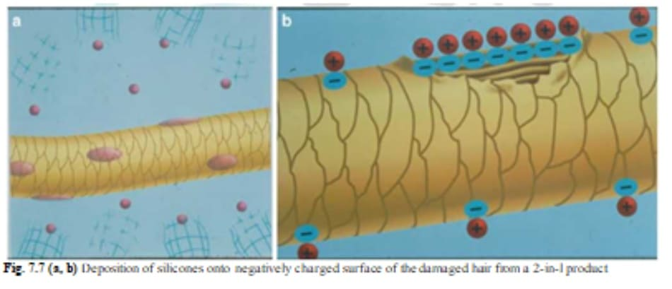 Fig. 7.7 (a, b) Deposition of silicones onto negatively charged surface of the damaged hair from a 2-in-l product