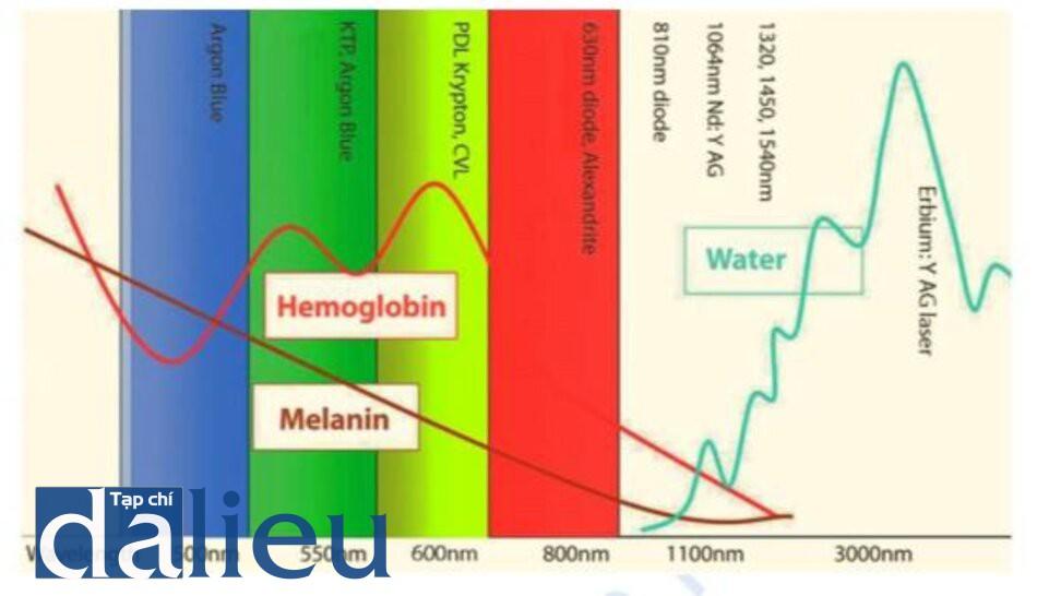 Hình 1.4. Đường cong hấp thụ của các sắc tố da chính và tia laser, ánh sáng ưu thế trong sự hấp thụ này.